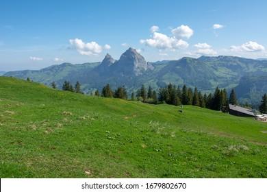 Spring flowers blooming on the fields of Fronalpstock, Switzerland.