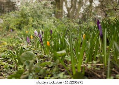 Spring flowers blooming - sezon change - Shutterstock ID 1652206291