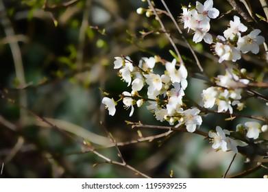 Spring flowers blossom