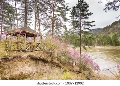 spring flowers blossom on the river bank near the house, Russia Altai Territory May 2018