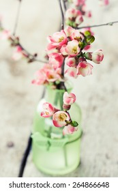 Spring flowers: branches of japanese quince in vase