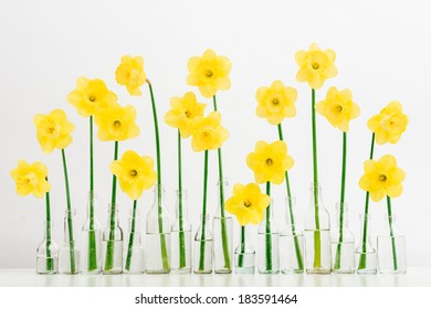 spring flowers in bright vases isolated on white