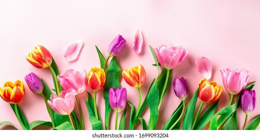 Spring flowers  - bunch of pink tulip flowers on white background