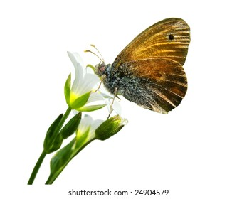 spring flowers with spring butterfly