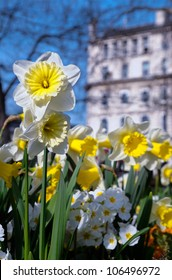 Spring flowers in Central London, England