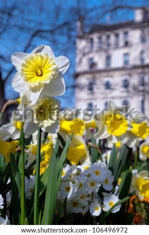Spring flowers central london england stock photo edit now spring flowers in central london england mightylinksfo