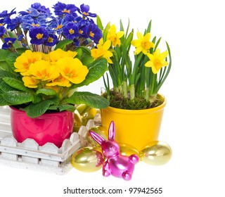 spring flowers with easter decoration. primulas and narcissus in pot on white background
