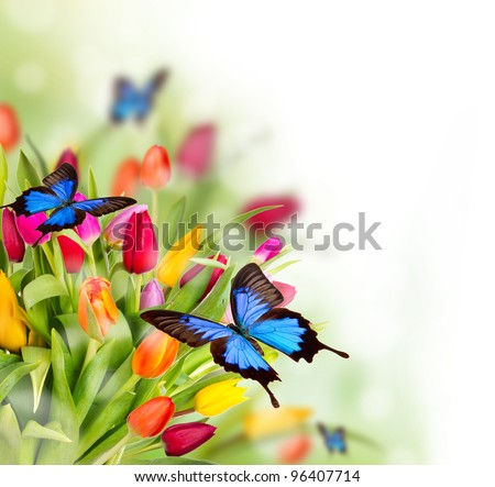 Spring Flowers Exotic Butterflies Stockfoto Jetzt Bearbeiten