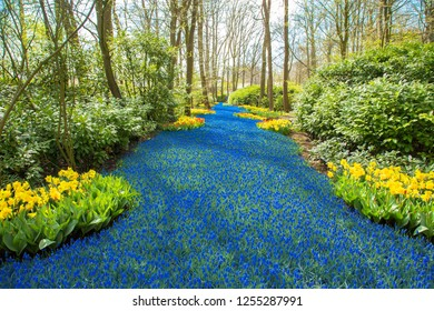 Spring flowers in the forest. Spring flowering and joy, bright colors of nature. Multicolored flower meadows. Beautiful spring background or texture.