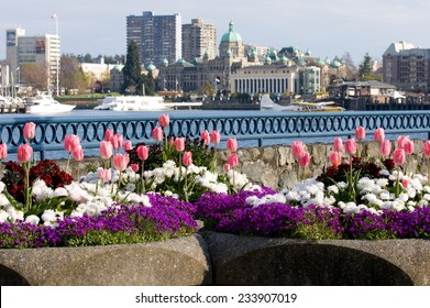 Spring flowers in front of Parliament Buildings and Inner Harbour, Victoria, BC, Canada