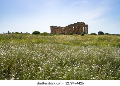 Spring flowers in front of the ruins of Temple of Hera (Temple E) at Selinunte Archaeological park, Castelvetrano, Trapani Province, Sicily, Italy