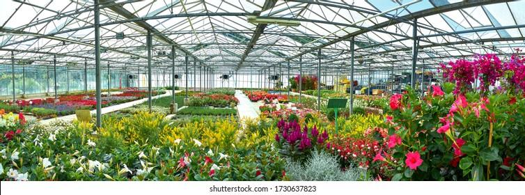 Frühlingsblumen im Gartenzentrum
