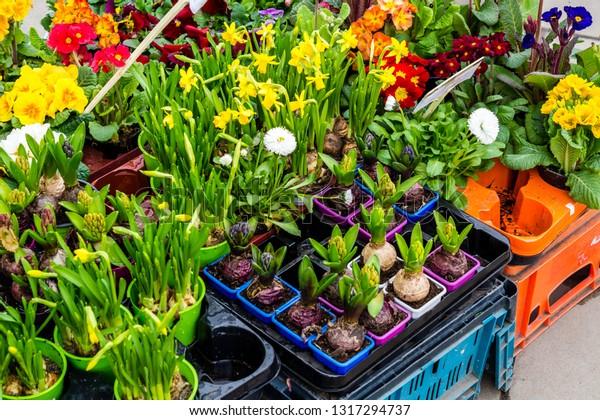Spring Flowers Garden Weekly Market Stock Photo Edit Now 1317294737