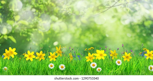 spring flowers and green grass background