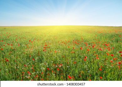 Spring flowers in green meadow and blue sky. Beautiful landscapes.
