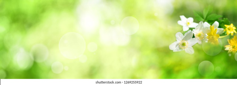 Spring flowers in a green nature background with bright bokeh