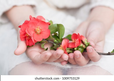 spring - flowers in the hands of a girl