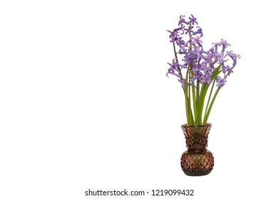 Spring flowers hyacinth  in vase  isolated on a white background
