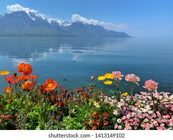 Spring flowers, lake and mountain in Montreux, Switzerland