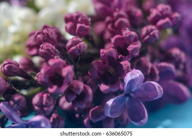 Spring flowers (lilac) on a blue wooden table with drops of dew and in the rays of the spring morning sun