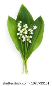 Spring flowers: lilly-of-the-valley isolated on white background