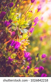 Spring flowers in morning sunlight. Nature view