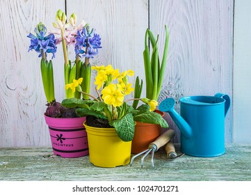 spring flowers in multicolored flowerpots on white paint wooden background