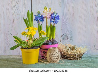 spring flowers in multicolored pots and nest with quail eggs on wooden background