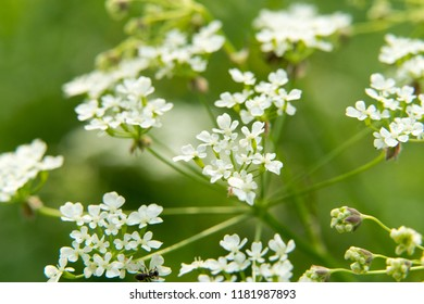 Spring flowers nature background. White spring flowers in the garden,sunlight,bokeh background