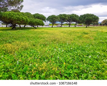 Spring flowers on Bao park in Arousa Island