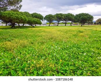 Spring flowers on Bao park in Arousa Island