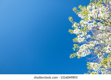 Spring flowers on blue sky background
