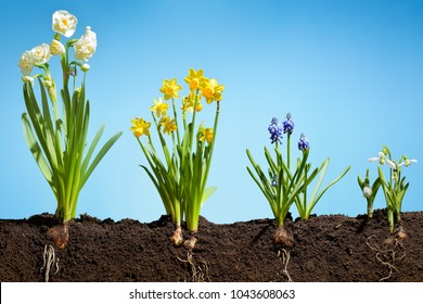 Spring flowers on fertile soil