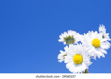Spring Flowers on a sky background
