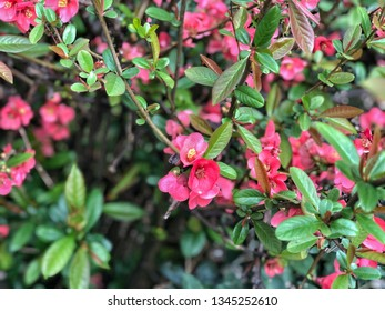 spring flowers on a tree