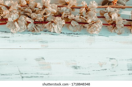 Spring flowers on white wooden background. Free copy space.