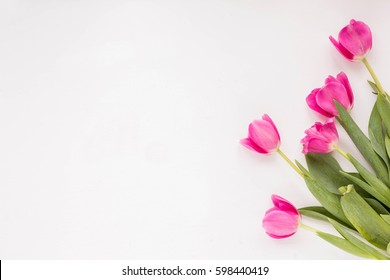 Spring flowers. Pink tulip on white background. Flat lay.