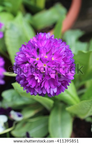 Spring Flowers Plants Dublin Bray Ireland Stock Photo Edit Now