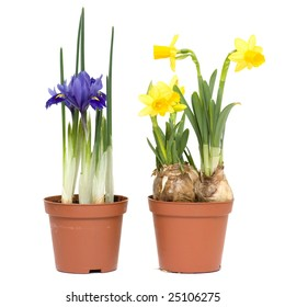 Spring flowers in pots, isolated on white