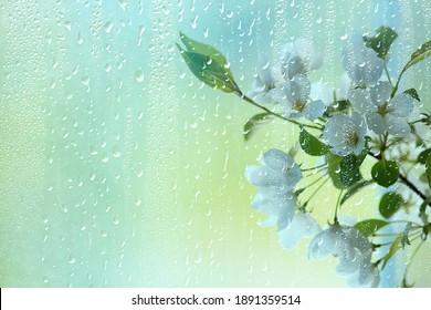 spring flowers rain drops, abstract blurred background flowers fresh rain