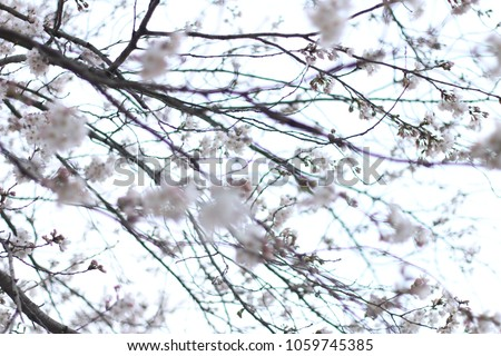 Spring Flowers Season Korea Stock Photo Edit Now 1059745385