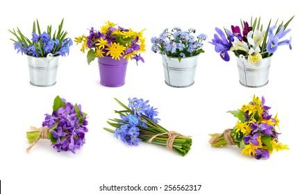 Spring flowers set. Isolated on white background.