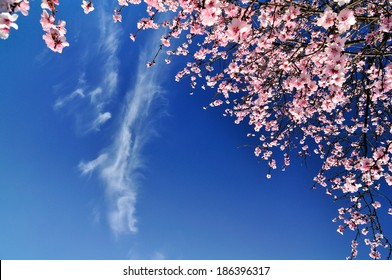 Spring flowers ,sky and clouds background