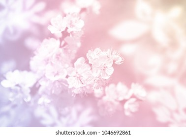 Spring flowers soft background