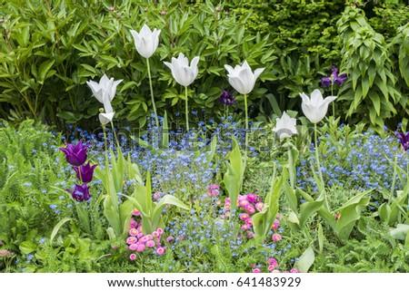 Spring flowers st james park london stock photo edit now 641483929 spring flowers in st james park london mightylinksfo