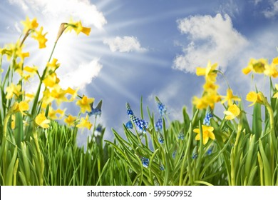 Spring Flowers With Sunny Blue Sky