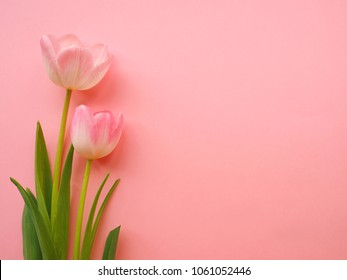 Spring flowers tulips - holiday background