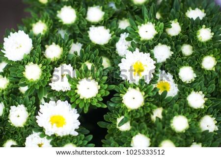 Spring Flowers Victoria Australia Stock Photo Edit Now 1025333512