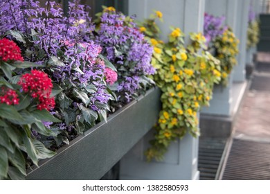 Spring Flowers in Window Sill Planter Box Among Home House Business Building for Curb Appeal