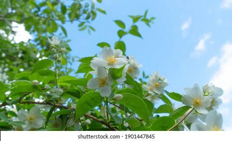 Spring flowers. Wiosenne kwiaty na łące - Shutterstock ID 1901447845